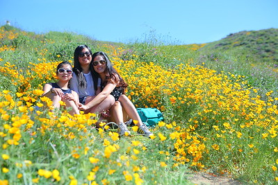 Lake Elsinore wildflowers (Super Bloom)