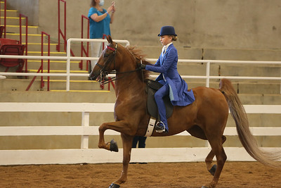 21. ASB Three-Gaited Show Pleasure – Junior Exhibitor