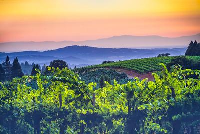 El Dorado County Wineries