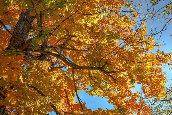 Autumn Leaves, WV (17 Photos)