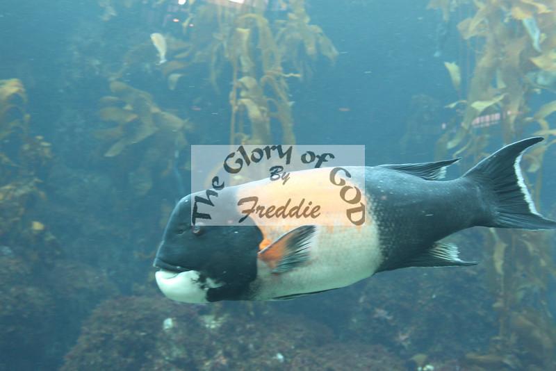 Aquarium 20129.jpg