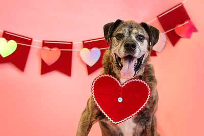 Forever Home Dog Rescue Valentines