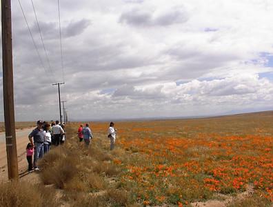 2004 to the poppyfields