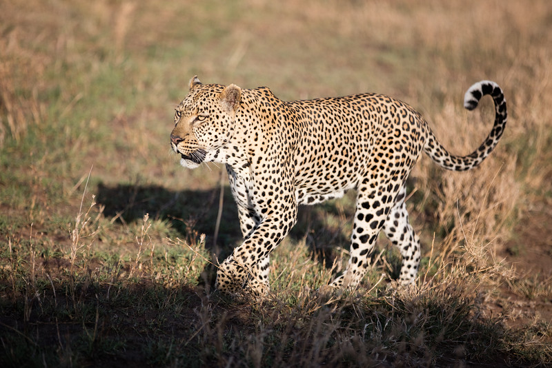 Africa - 101616 - 3777.jpg