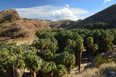 Agua Indian Canyons Land, Palm Springs, CA - Oct., 2017