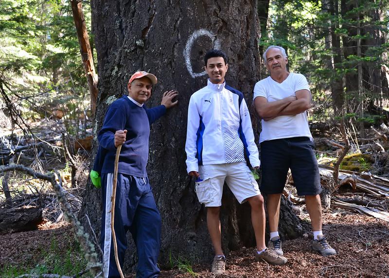 NEA_2257-7x5-Old Growth tree-Hikers.jpg