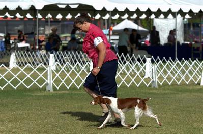 Sporting Dog Fanciers Dog Show - Long Beach CA