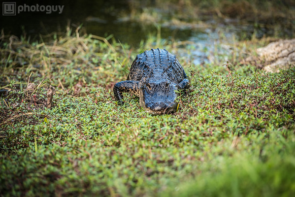20140104_BIG_CYPRESS_NATIONAL_PRESERVE (18 of 33)