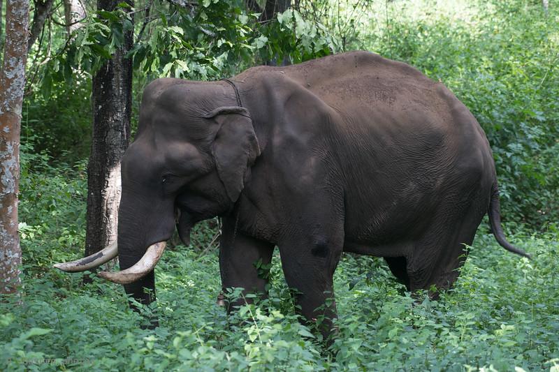 19-Sept Wildlife-5479.JPG