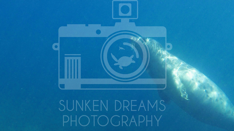 Lundy Island Edit.Still094.jpg
