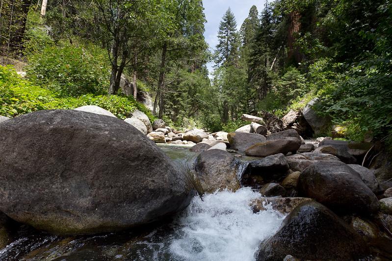 Sequoia_0578.jpg