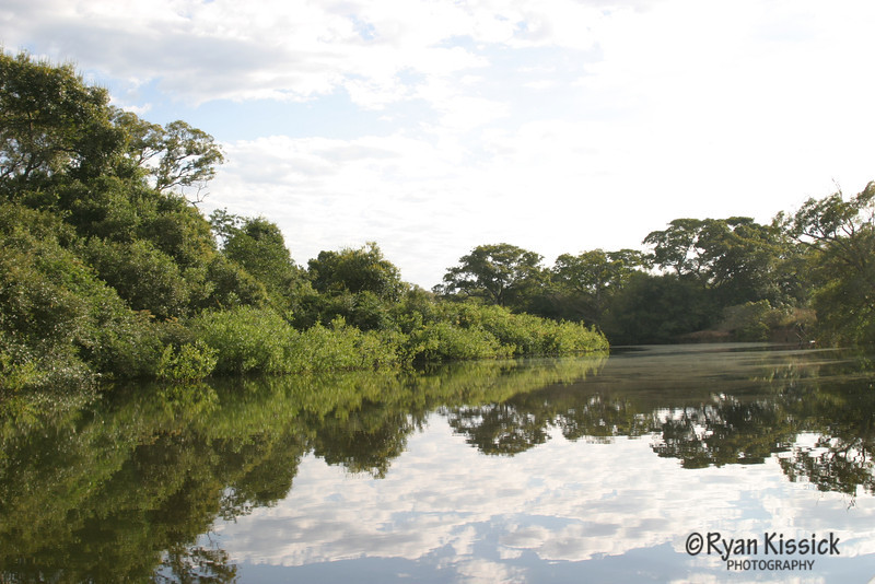 Scenic shot of a river in the Pantanal