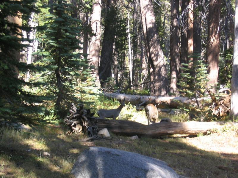 SequoiaSep04-16.jpg