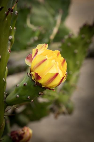 NAT - Rose Garden