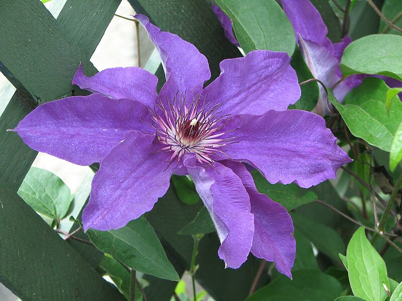 garden-2007-05-0593_std.jpg