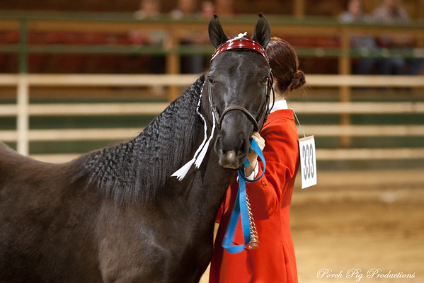 MWHTA Midwest Walking Horse  Trainers Association