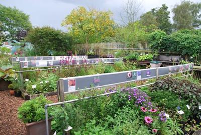 verkoopsvakken met op achterzijde Koelreuteria paniculata