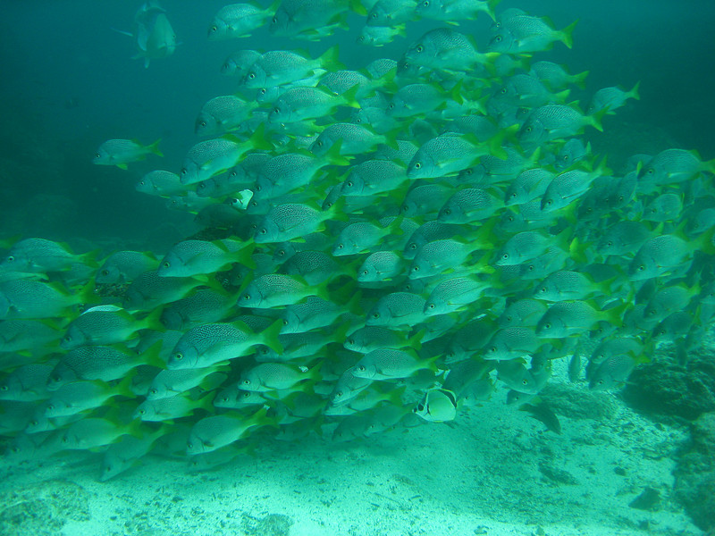 Diving in the Galapagos (153 of 392)