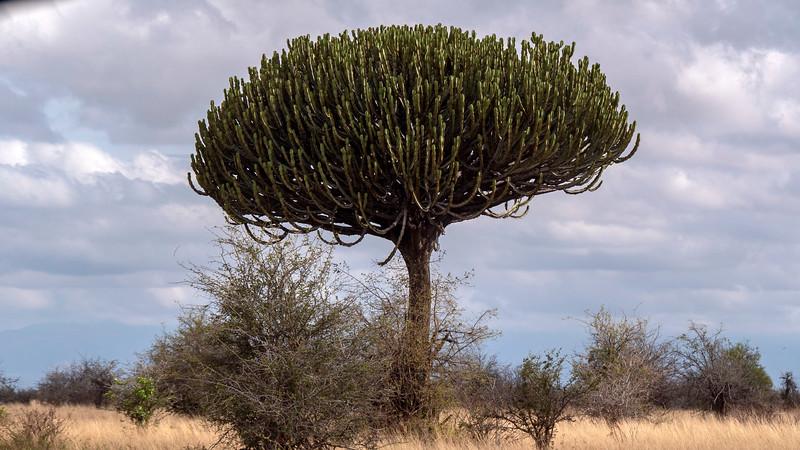 Tanzania-Tarangire-National-Park-Safari-01.jpg