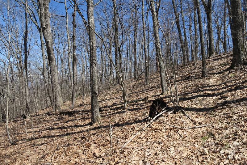 Shelton Pisgah Trail - 4,000'