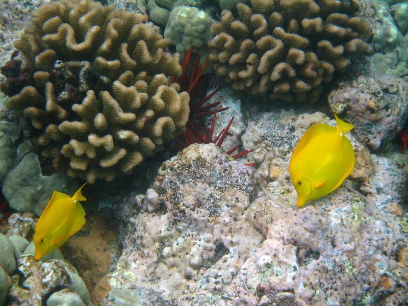 504- 20080416- Hawaii 20-Snorkelling IMG_0751.jpg