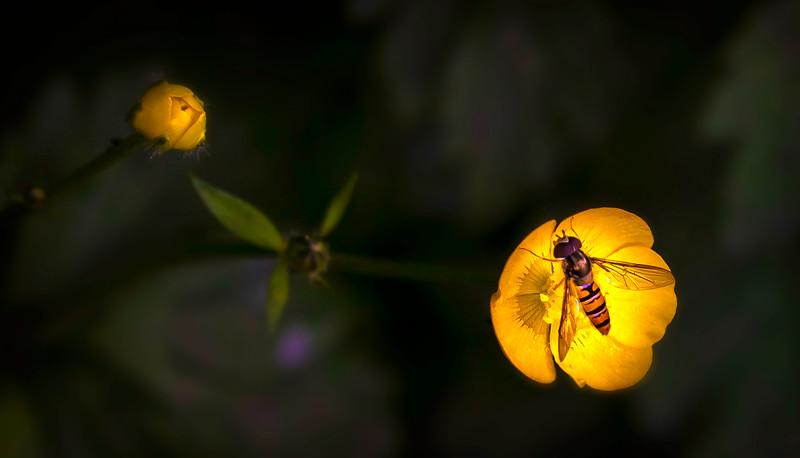 Bugs and Beetles - 172.jpg