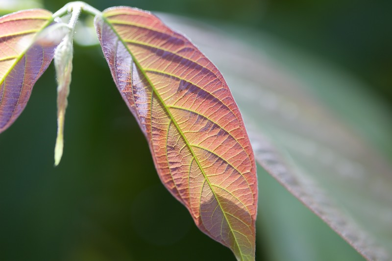 Iridescent Leaf