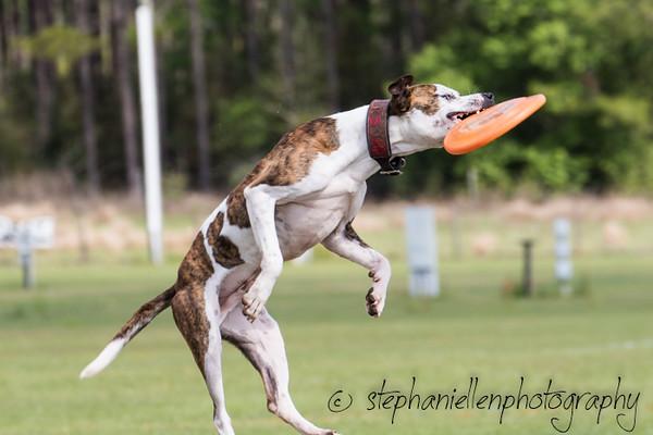 _MG_2688Up_dog_International_2016_StephaniellenPhotography.jpg