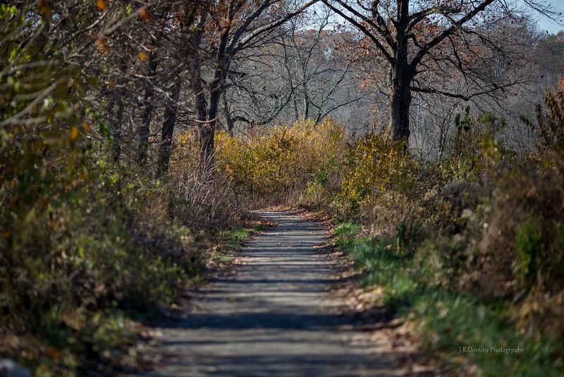 Autumn - Late November at Maple Ridge Tall Pine State Preserve, Mantua, New Jersey