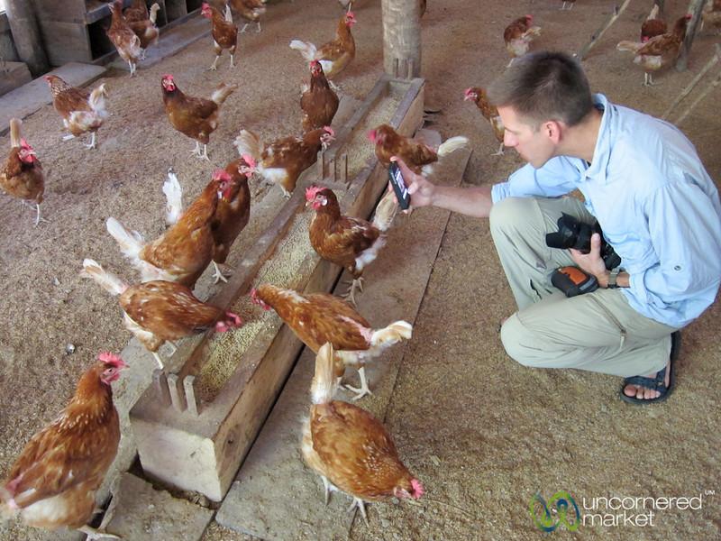 Dan Photographing Hens with iPhone - Morgan's Rock, Nicaragua