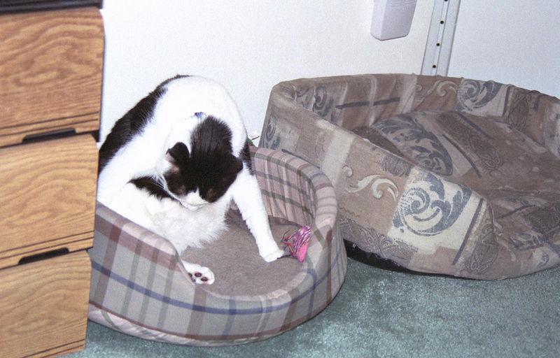 2003 12 - Cats 12.jpg