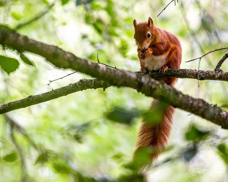 British Wildlife Centre_Z6-7350.jpg