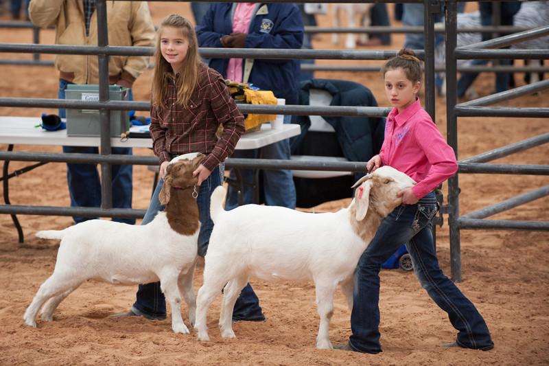 Hays_County_Show-6605.jpg