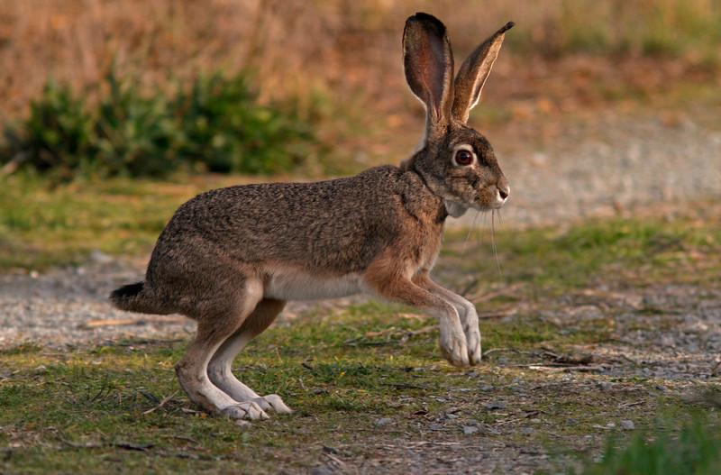 Rabbitgallinas1600.jpg