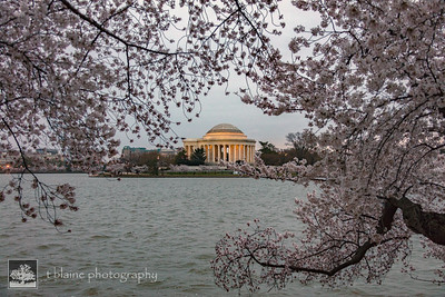 2018_04_07 - DC - Cherry Blossoms