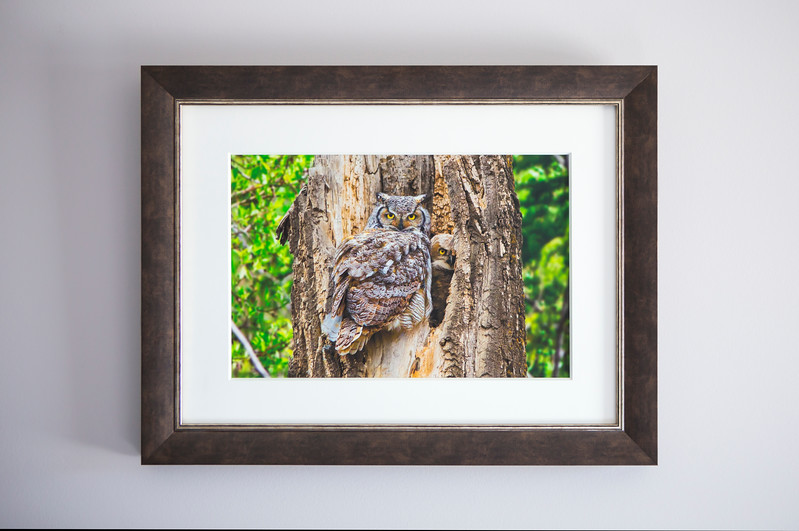 Two Owls Framed.jpg