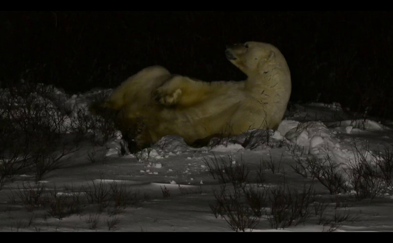 sleeping_bear_002.mov