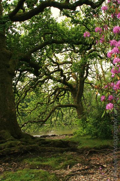 38 eWeberPhotographer.com 216 526 4767 .jpg