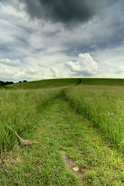 A path leads through a large grassy field at The Lump at Milepost 261 on the Blue Ridge Parkway in North Carolina on Friday, June 13, 2014. Copyright 2014 Jason Barnette