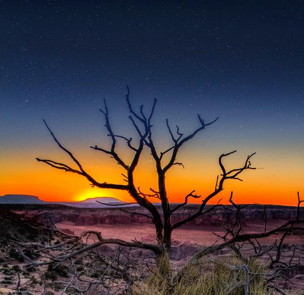 sunset tree stars.jpg