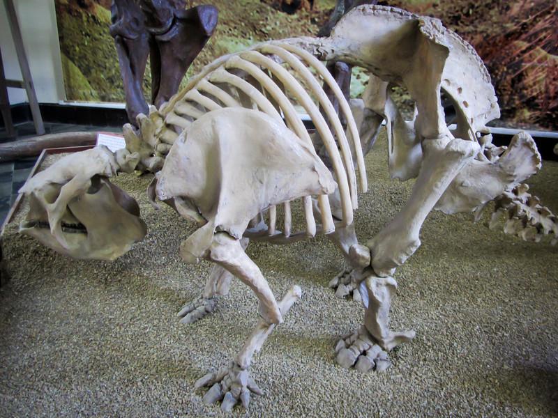 Tarija 201205 Museum Paleontology (15).jpg