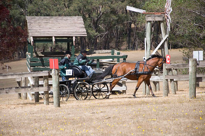 Victorian Carriage Driving Champs - Gallery 2