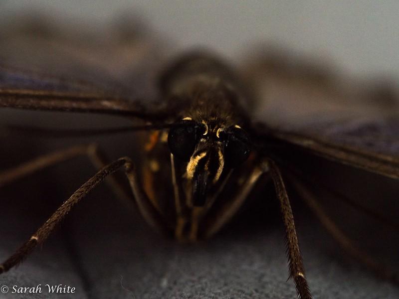 140503_ButterflyHouse_424.jpg