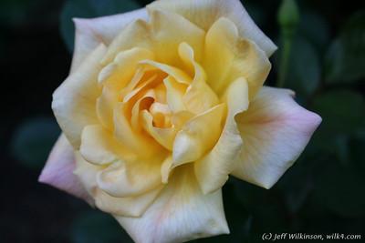 Wilk4 Floral 3