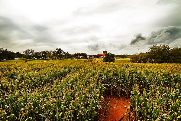 Southern Belle Farm 2012