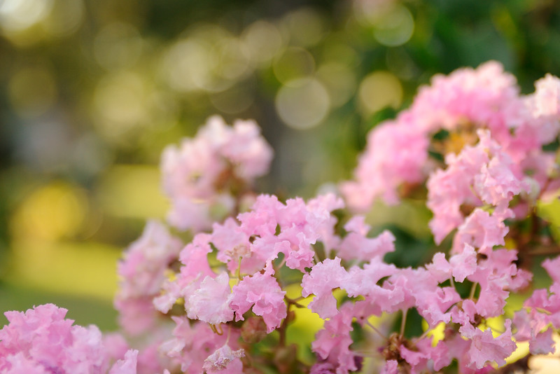 It made the crepe myrtle more vivid and vibrant.