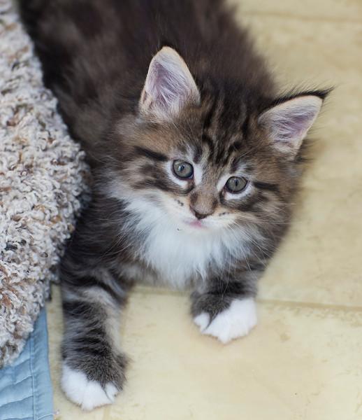 Kittens252.jpg
