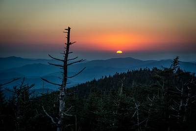 Fall in the Great Smokey Mountains with Ron Modra and Patrick Murphey-Racey :: Oct 24-29, 2021