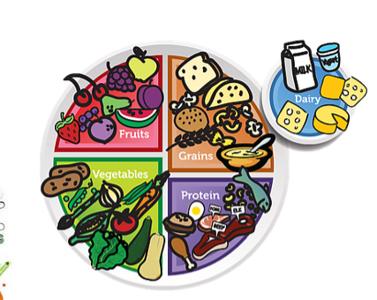 (L47) Food Plate