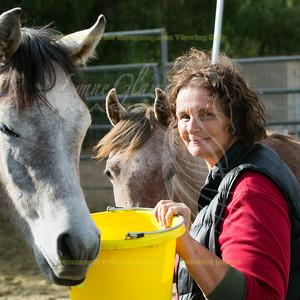 Love This Horse Equine Rescue